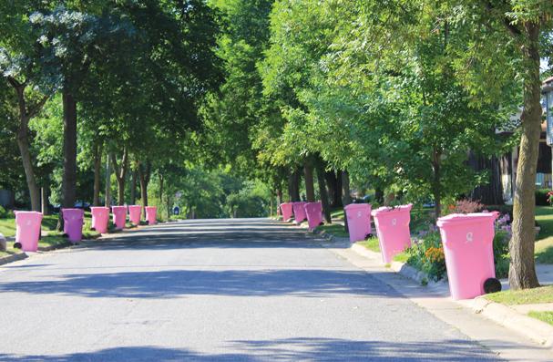 Pink Cart Street